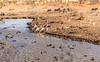 Life at a waterhole (leonoos) Tags: waterhole life drinking etosha national park