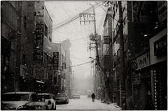 ((Jt)) Tags: leicam3 50mmsummiluxv2 ilfordhp5 pushedfilm streetphotography korea seoul asia southkorea buyfilmnotmegapixels filmisnotdead storm snow jtinseoul