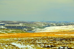 Somewhere in Scotland...Great colours of Snow, Golden grass...Could stop myself to stop the car and take a pic (NNJHA1971) Tags: