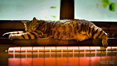 Si Dorme...😴 (Venom Marco) Tags: gatti sleep animali animal cat catlife colors nature friends mycat ilovemycat