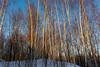 _MG_9656 (f0t0R0man) Tags: tree nature winter forest snow season outdoors landscape branch scenics sky woodland blue coldtemperature frost beautyinnature sunlight autumn nonurbanscene tranquilscene