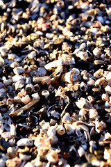 #shells #teeth #nikonchallenge #NIKON #nikond3400 (freitasjeanne) Tags: shells teeth nikonchallenge nikon nikond3400