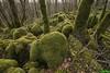 Lapiaz dans le bois de Pissery - Echay (francky25) Tags: lapiaz dans le bois de pissery echay karst franchecomté doubs