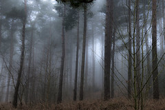 Misty Morning (darrenball189) Tags: forest fog nature woodland landscape mist tree morning beautiful scenery foggy dawn view misty light wood sunlight shadow season pine wilderness dark woods countryside trees foliage silhouette scene plant