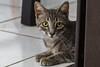 Beba and Bebe (Alex Vikingo) Tags: bebe beba cat female kitten street lookingforhome