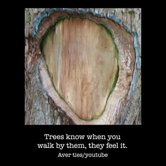 trees-feel (AverTiesPhotos) Tags: averties art famous unusual funnyfaces photoart streetphotography artphoto photographer artist artists fineart exotic sensual portrait faces bestoftheday photooftheday colorful picoftheday protest parkland motivation inspiration pretty climatechange mothernature walk light new green red street water nature city beach white flower people imperfection garden
