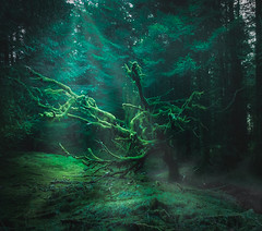 In the old woods (ThePunkyScotsman) Tags: woods forest trees nature gloomy sunburst moss lichen dark shade creepy halloween horror