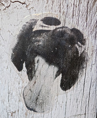 Dog, Washington, DC (Robby Virus) Tags: washington dc districtofcolumbia dog doggie tongue goggles sunglasses paste pasted wheatpaste photograph pet street art