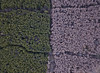 #47 Forest boundaries (Timster1973 - thanks for the 15 million views!) Tags: mavic drone uav quadcopter dji mavicprodrone djimavicpro fly up uphigh droneflying tim knifton timster1973 timknifton explore exploration perspective lookdown lookingdown color colour trees tree forest boundary outdoors external high nature wentwood