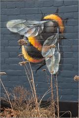 Always Busy (Mabacam) Tags: 2018 london kingston kingstonuponthames thames riverside streetart wallart urbanart publicart spraycanart aerosolart painting paint mural freehand graffiti urbanwall wall bee honeybee