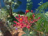 DSC05343 (familiapratta) Tags: sony dschx100v hx100v iso100 natureza flor flores nature flower flowers