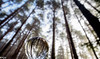 Woods (scottishkennyg) Tags: forest woods trees scotland inverness woodland refraction