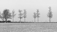Trees And Fences (Alfred Grupstra) Tags: winter tree nature snow outdoors blackandwhite white nopeople grass landscape coldtemperature season sky field fence scenics adoxchs100ii film