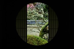 The Window of Enlightenment  / 京都 泉涌寺雲龍院 悟りの窓  Kyoto  Unryu-in (maco-nonch★R) Tags: window enlightenment thewindowofenlightenment 悟りの窓 窓 梅 old traditionell traditional buddhism plum japaneseapricot apricot tree kioto kyoto unryuin 京都 雲龍院 泉涌寺 japanischer japanesephotographer japon japonés japón japanesetemple japanesebuddhism tempel temple tempo inside room syoin 書院 canon eosm5 ef50mmf18stm famous throughherlens asia