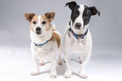 Sammy & Alfie (joolst14) Tags: pet pets dog dogs expression animal littledoglaughedstories