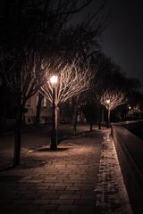 Dark streets (Olli Tasso) Tags: street lamp path sidewalk tree park katu katuvalokuvaus streetphotography budapest hungary buda urban cityscape city travel matkailu matkakuva travelphotography light dark night spooky moody scary