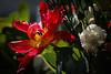 Brassée (Solène.CB) Tags: fleurs flowers bouquet bunch love amour mothersday fêtedesmères