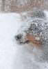 Snow Dog (peterkelly) Tags: digital northamerica canon 6d canada wheatley winter snow dog falling ontario