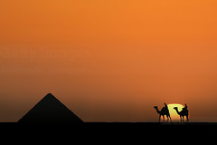 Camels at the pyramids (Nick Brundle - Photography) Tags: gizapyramids giza cairo egypt egyptian unescoworldheritagesite pyramid depthoffield sunset gettyimages getty pyramidsofgiza d750 nikond750 nikon80400f4556afsvr silhouette camels