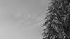 Natural Mystic (Mare Crisium) Tags: snow neige winter hiver blanc white tree sapin fir mountain montagne brume mist mystic nature fog brouillard alpes alps belledonne crête massif pic peak crest