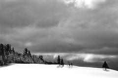 Bientôt le printemps? (Nicole Barge) Tags: snow sky landscape trees arbres forest lumière light sapin contrejour 2018 québec noiretblanc blackandwhite hiver winter ombres ombresportées stpatricedebeaurivage