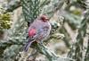 (Kerstin Winters Photography) Tags: naturephotography naturfotografie flickrnature flickr nikondigital nikondsl newmexico outdoor vogel bird finch