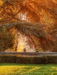 Autumnal light in Père Lachaise cemetery (alcowp) Tags: tourism cemetery cimetiere light fall autumn paris france