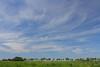 Summer Sky (EP Diederiks) Tags: summer sky zomer clouds wolken cirrus waddinxveen bentwoud boskoop alphen aan den rijn lucht weer bomen trees