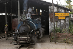 Tindharia Loco Shed (gooey_lewy) Tags: darjeeling himalayan mountain railway steam tour magazine india narrow gauge sharp stewart b class 040 tank saddle well loco locomotive train rail indian steep hill cart road west bengal charter dhr dhmr joy toy forest jungle 782 sun light railroad tree people grass haze mist tindaria works tindharia up crew work shed engine 2822 ft