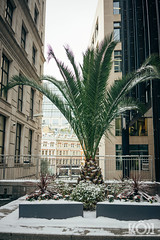 snow-london-127.jpg (jonneymendoza) Tags: a9 winter londonsnow people jrichyphotography snow street candid londonphotographer white chosenones