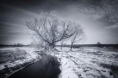 Return of winter (xkolba) Tags: bw blackandwhite mood podlasie march landscape winter frost tree river snow sky poland willow