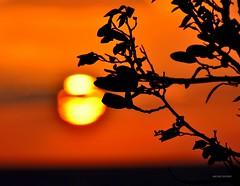 Al tramontar del Sole (Arcieri Saverio) Tags: cielo rosso nikon sole sun sunset nikkor 300 300mm travel tramonti tramonto light luce red rouge passion d5100