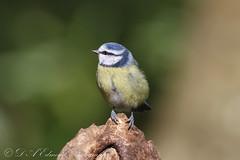 Rozelle Selection (Dougie Edmond) Tags: bird birds nature wildlife canon spring sunshine ayr scotland unitedkingdom gb