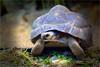 Schildkröte (ingrid eulenfan) Tags: zoo leipzig tier animal schildkröte turtle