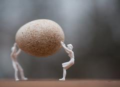 255: Good Egg