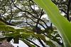 Laguna de Apoyo, Nicaragua (Casa Marimba) (zug55) Tags: lagunadeapoyo nicaragua laguna lake lago apoyo apoyolagoon lagoon masaya lagunadeapoyonaturereserve reservanaturallagunadeapoyo casamarimba volcaniclake volcano crater volcán