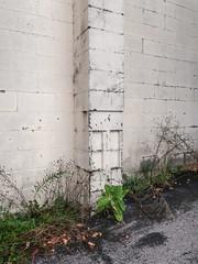Cinderblock chimney. (Tim Kiser) Tags: 2017 20171008 cadillac cadillacmichigan img7779 michigan october october2017 wexfordcounty wexfordcountymichigan alley chimney cinderblockarchitecture cinderblockbuilding cinderblockchimney cinderblocks concreteblockbuilding concreteblockchimney concreteblocks creamcoloredbuilding creamcoloredpaint downtown downtowncadillac northernlowerpeninsula northernmichigan northwesternlowerpeninsula offwhite offwhitebuilding offwhitepaint paintedcinderblockwall paintedcinderblocks paintedconcrete paintedconcreteblockwall paintedconcreteblocks urbanplants weeds