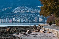 Best Coast 🌊🚶🌲 Vancouver, BC (Michael Thornquist) Tags: stanleypark stanleyparkseawall seawall englishbay westvancouver westvan dundarave hollyburn whitbyestates transcanadahighway upperlevelshighway shore beach fergusonpoint shoreline driftwood rockyshore pedestrians bikelane stonewall vancouverphotos vancouver britishcolumbia dailyhivevan vancitybuzz vancouverisawesome veryvancouver 604now photos604 explorecanada ilovebc vancouverbc vancouvercanada vancity pacificnorthwest pnw metrovancouver gvrd canada 500px burrardinlet