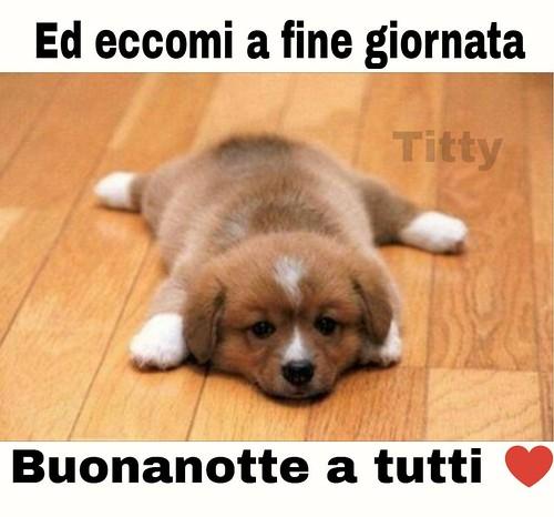 Buonanotte Atutti Link Divertenti Page Facebook Animal Titty