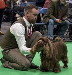 GAZ_1302 (garethdelhoy) Tags: dog sussex spaniel crufts 2018 kennel club