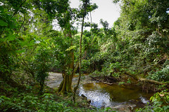Creek flowing into Rio Maimon - Higuey Dominican Republic (mbell1975) Tags: laaltagracia dominicanrepublic do creek flowing rio maimon higuey dominican republic dr island caribbean plantation farm water run stream river tree trees paysage landscape