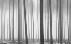 Mystery foggy woods (Lor3ncs) Tags: peace peaceful latvia bw blackandwhite stroll walk trees forest woods explore nature morning foggy fog mystery