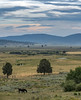 Oh give me a home... (acase1968) Tags: sycan ranch horse sky beatty oregon nikon d500 nikkor 70300mm cattle cows sunset clouds