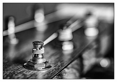 Saiten (Foto_Michel) Tags: olympus omd macro gitarre guitar blackwhite schwarzweiss closeup saiten strings martin