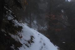 mes traces.... (bulbocode909) Tags: valais suisse forêts arbres hiver neige nature montagnes sentiers traces brouillard feuilles orange