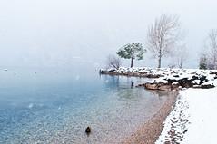 Winter lake (vanyrei) Tags: winter lake snow gardasee gardalake lagodigarda trentino italy landscape water nature photonature