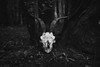 (Fabrizio Ara) Tags: samyangfe35mmf28af samyangfe2835af sonya7ii sony a7 ilce7 fahc samyang35mmf28 autofocus samyang 35mm 28 sardegna sardinia italy italia death dark creepy grime shadow disturbia postapocalyptic eerie weird damned cvlt culto hell satanic skull bones disturbed surrealism gothic mystery occult occultism paganism disturbing evil devil esoteric lucifer hermetism mysticism blackness alchemic esoterismo mono black white bianco nero bw blackwhite blackandwhite blancoynegro monochrome bn monochromatic