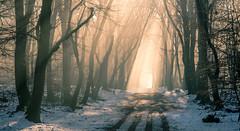 Walking into the light (Guido de Kleijn) Tags: speulderbos gelderland geulders guidodekleijn nikond500 nikon1680f28 veluwe hogeveluwe garderen netherlands holland light lightrays forest wood