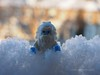 The Abominable Snowman (Mars Mann) Tags: snow legophotography lego minifigures afol macrophotography white depthoffield cold blue winter february olympus yeti toyphotography ice freezing flickrmarsmann microfourthirds mirrorless marsmannlego daytime capture focus blur