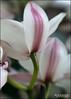Planting Fields... (angelakanner) Tags: canon70d lensbabysweet50 longisland plantingfields orchid flower greenhouse